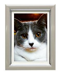 猫のパステルカラー遺影額
